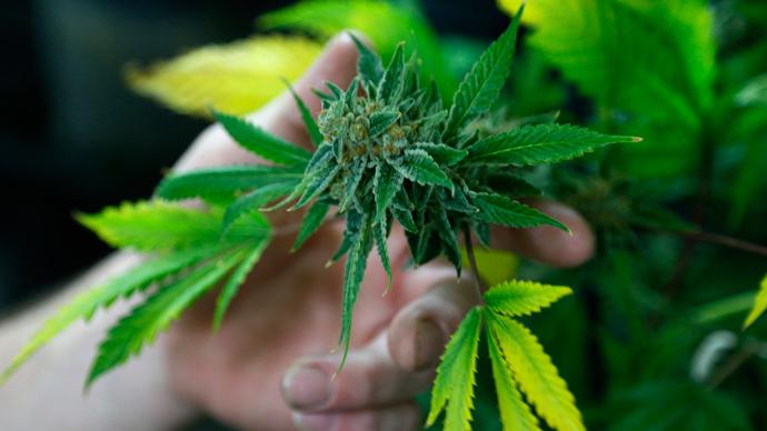doi-tineri-suspectati-de-consum-de-marijuana-dusi-de-politie-la-spital-32962