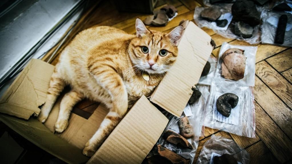 pisici muzeu brukenthal (11) (Copy)