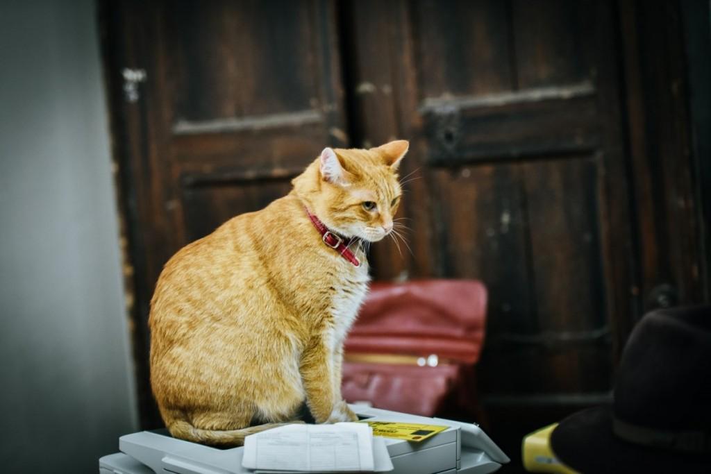 pisici muzeu brukenthal (13) (Copy)