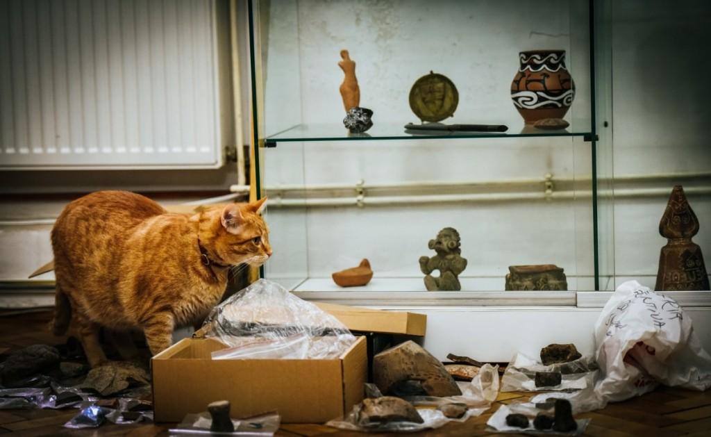 pisici muzeu brukenthal (14) (Copy)