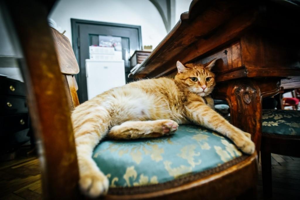 pisici muzeu brukenthal (18) (Copy)