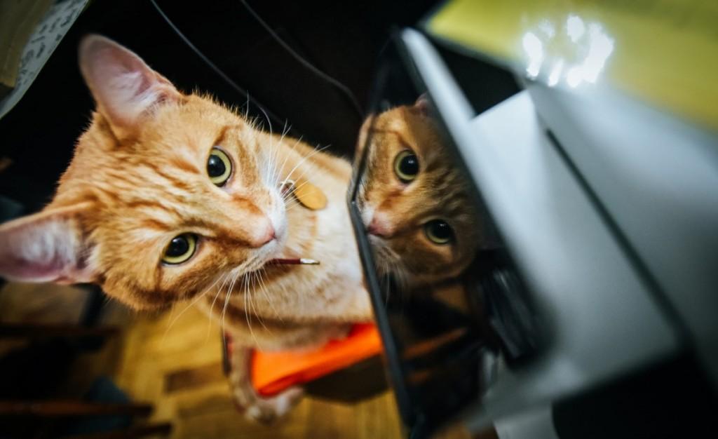 pisici muzeu brukenthal (2) (Copy)