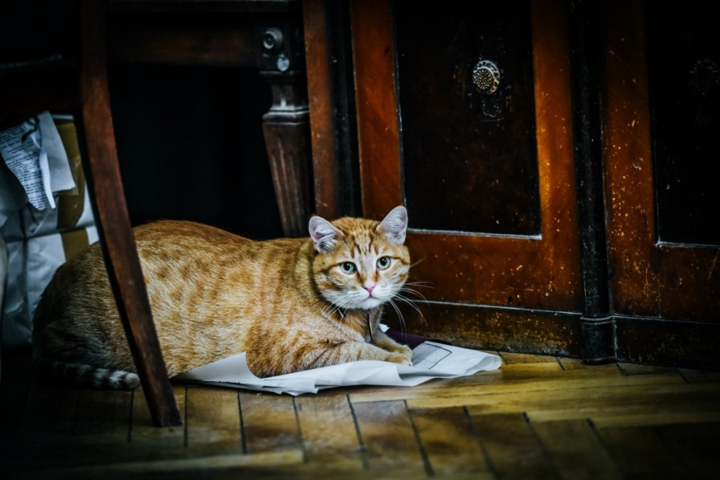 pisici muzeu brukenthal (3) (Copy)