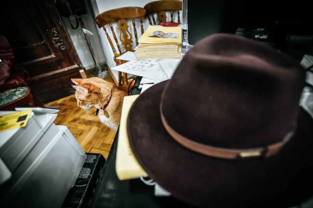 pisici muzeu brukenthal (4) (Copy)