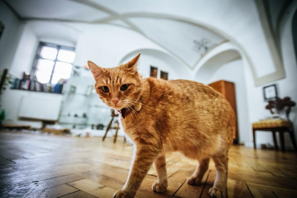 pisici muzeu brukenthal (6) (Copy)