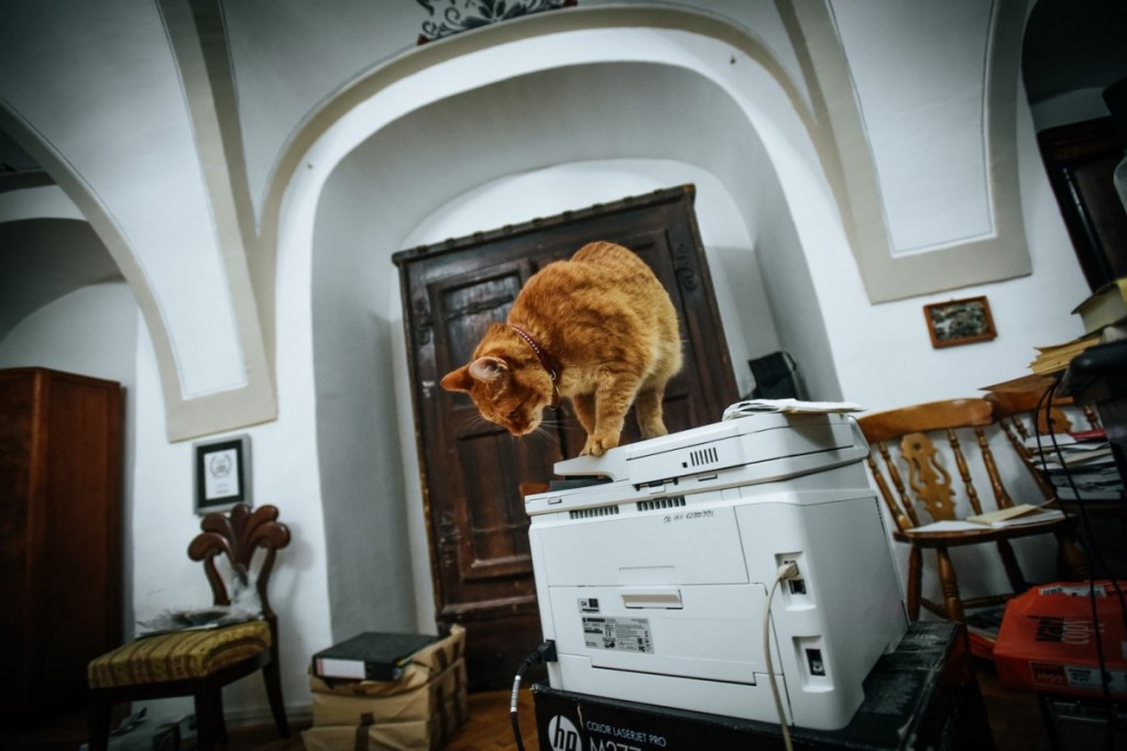 pisici muzeu brukenthal (8) (Copy)