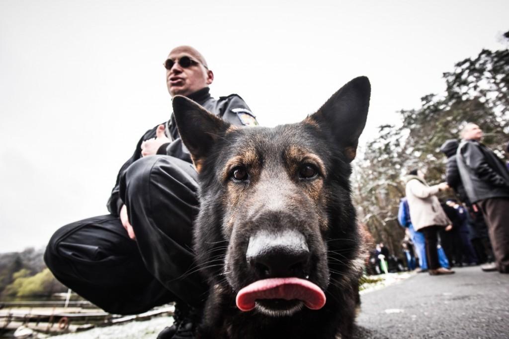 Alin Pascu caine Nom ziua politiei (1)