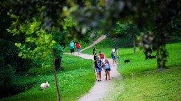 parc sub arini caini plimbare (16)