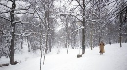 iarna subarini