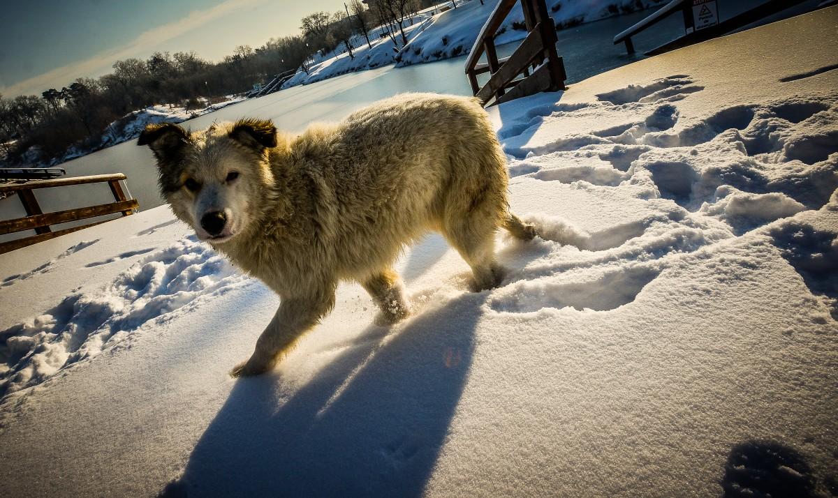 ocna-lacuri-inghetate-iarna-frig-ger-zapada-7
