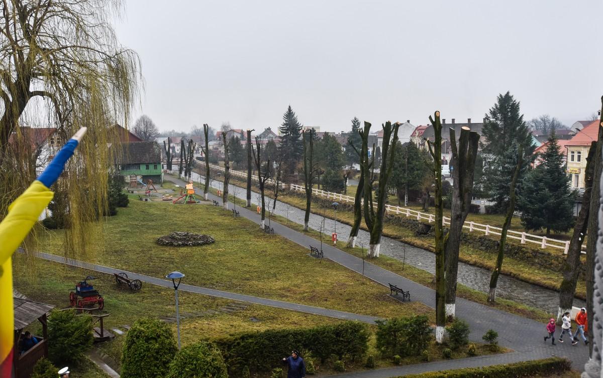 copaci toaletati centru parc saliste (1)