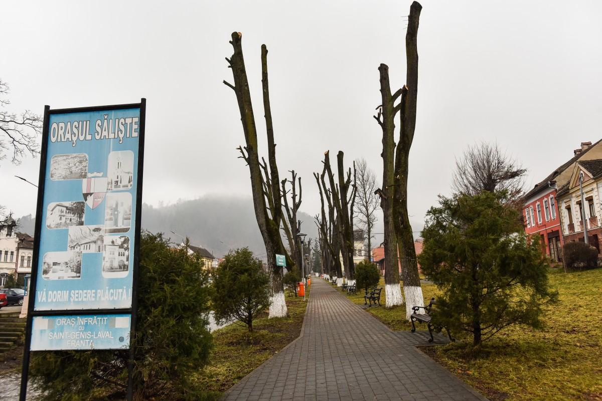 copaci toaletati centru parc saliste (2)
