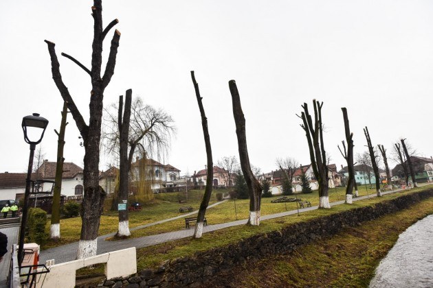copaci toaletati centru parc saliste (3)