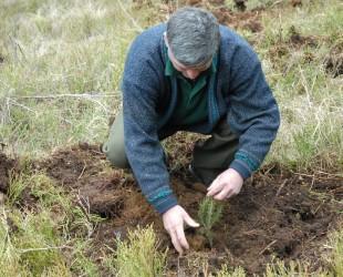 impadurire copaci plantat padure