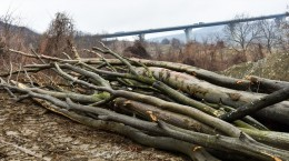 padure taiata aciliu lemne copaci (20) (Copy)