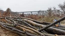 padure taiata aciliu lemne copaci (44) (Copy)