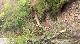 copac valea oltului