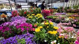 festivalul gradinilor flori (18)