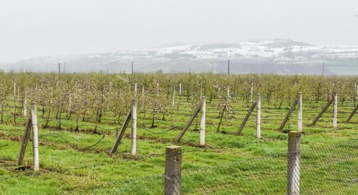 livada meri ninsoare inghet (1)
