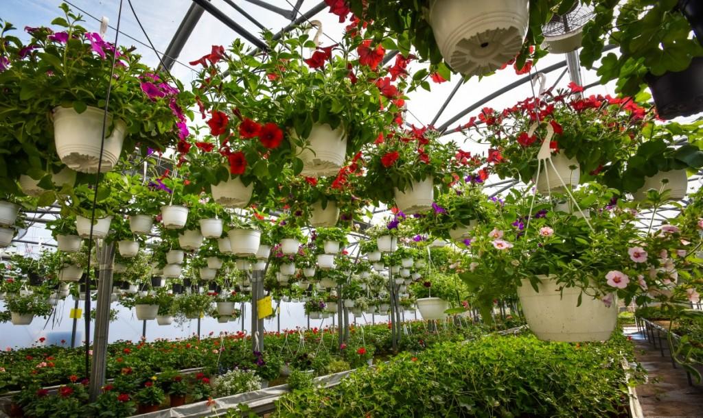 7 Idei De Flori Pentru Un Balcon Viu și Colorat Toată Vara