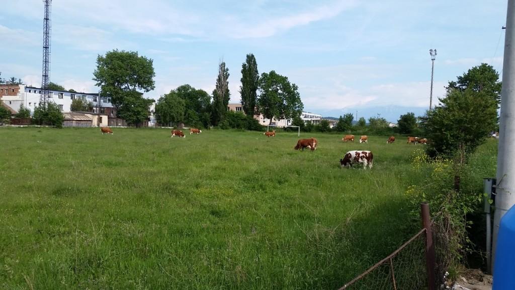 teren fotbal broscarie vaci (1)