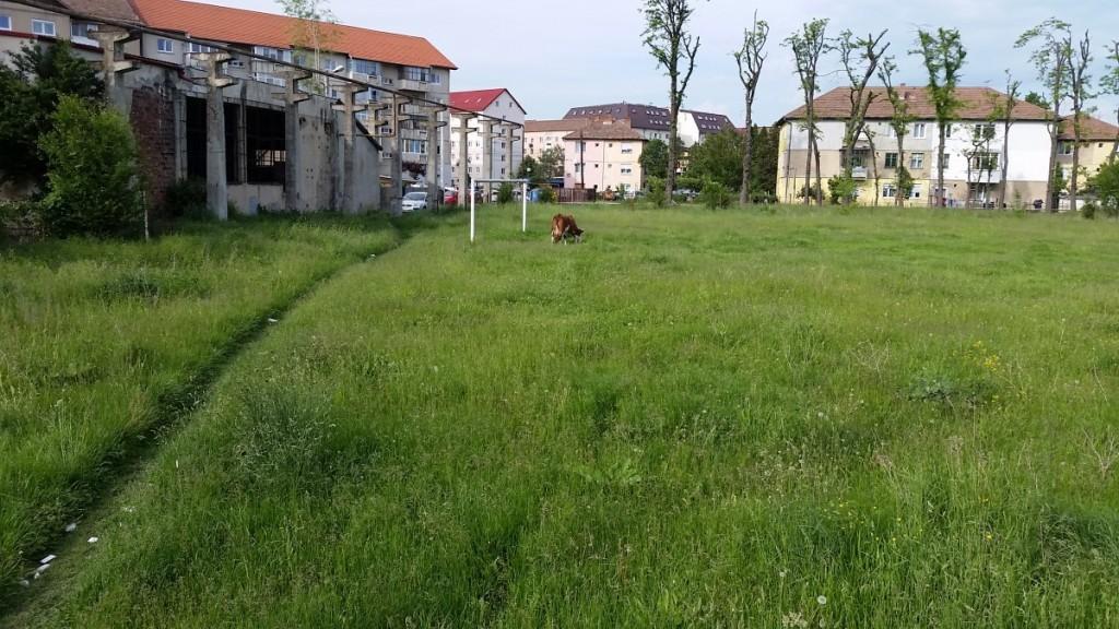 teren fotbal broscarie vaci (2)
