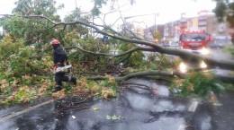 furtuna copaci cazuti