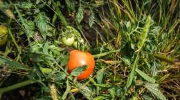legume gustoase (11 of 32)