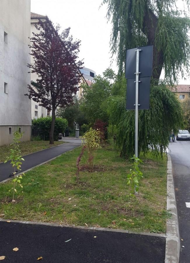 zona verde cartier pantari copaci