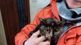 pisica salvata din canal
