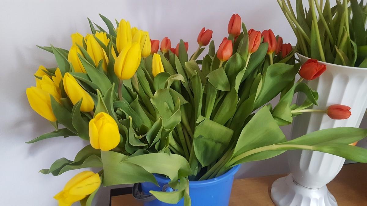 florarie non-stop (5)
