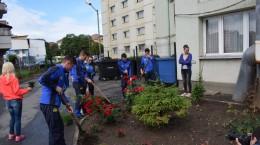 iubim sibiul plantare (1)