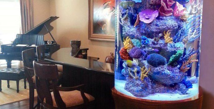 e4cc87f3aa31ebe4a09fe18d074d382d-tanked-aquariums-custom-aquariums-361y5ghug3uoxlxioycmq2