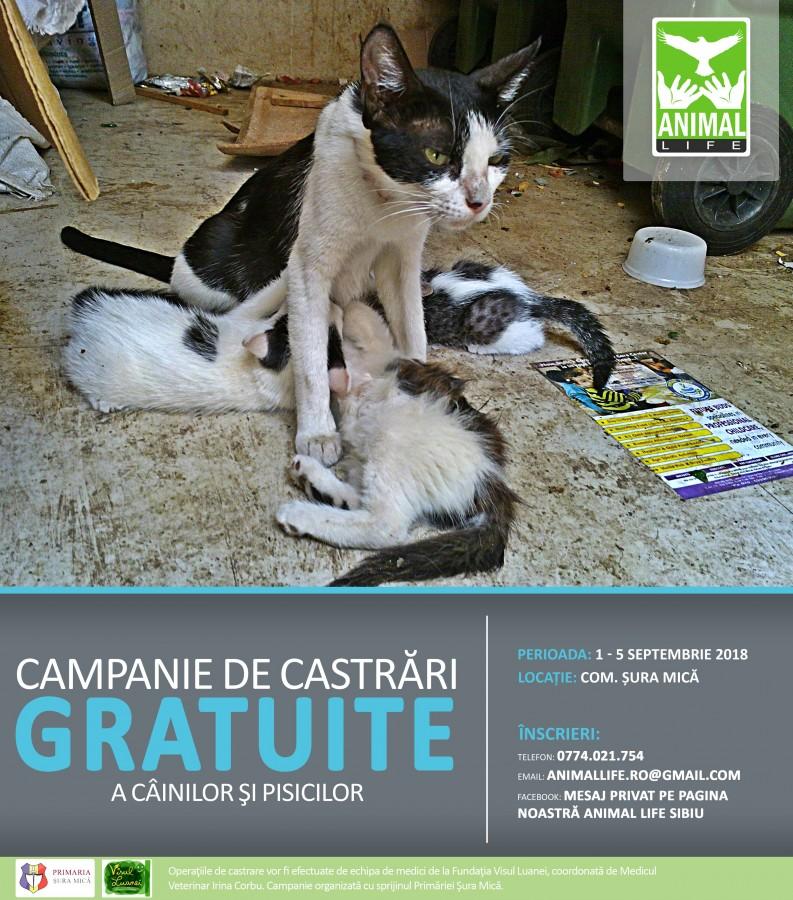 afis-campanie-sterilizari-SEPT-2018-2