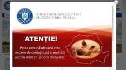 info pesta porcina atentie