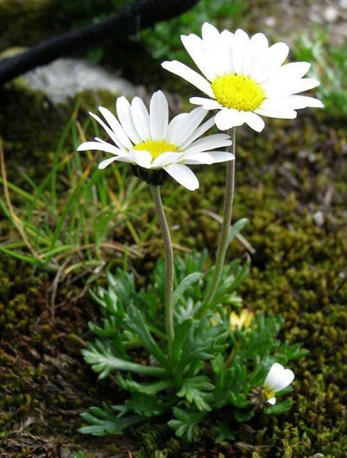 parang_flora_13082013_foto19rf-romania-natura