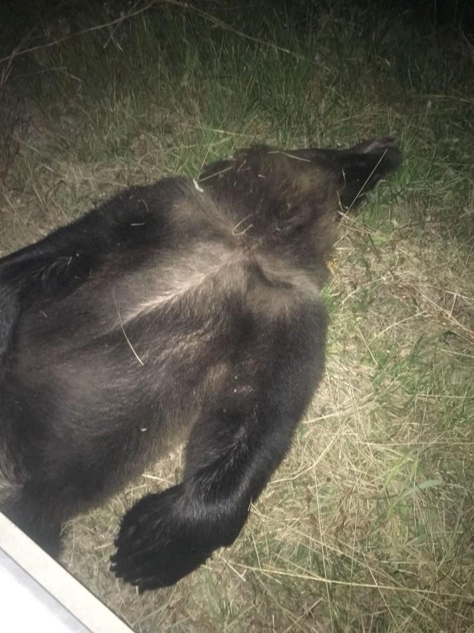 urs omorat autostrada 2