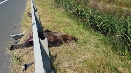 urs omorat autostrada