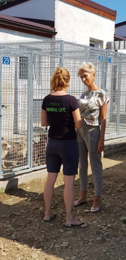Turcan animal life (2)
