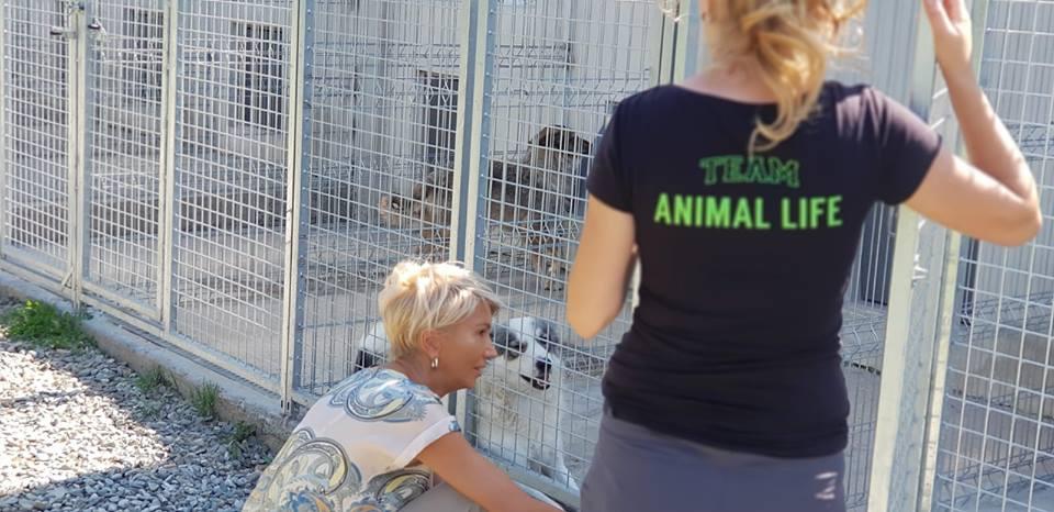 Turcan animal life (4)