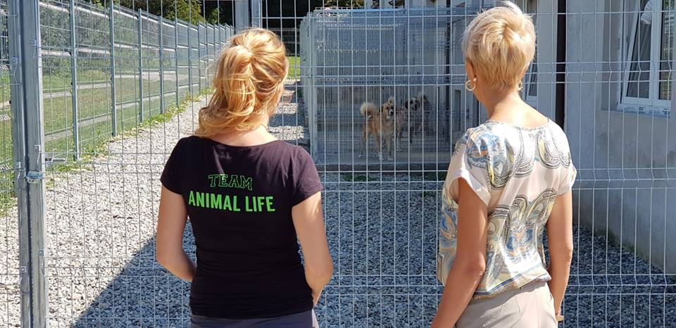 Turcan animal life (9)