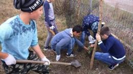 cavaleri rusi plantare stejari (4)