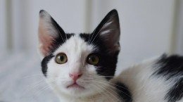pisici animal life1