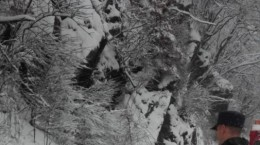 valea oltului circulatie iarna copaci cazuti 2