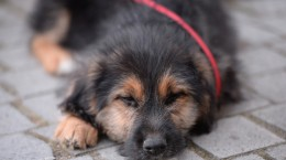 catei animal life caini adoptii (8)
