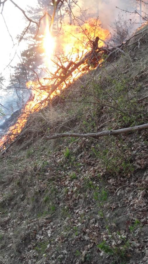 incendiu padure malancrav