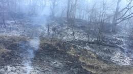 incendiu valea viilor 2