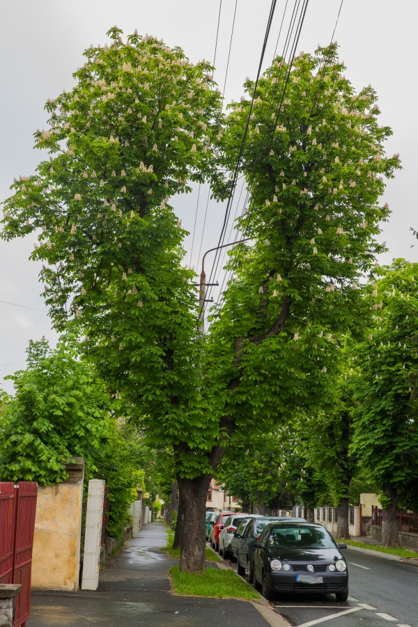 copac inima cabluri electrice (1)