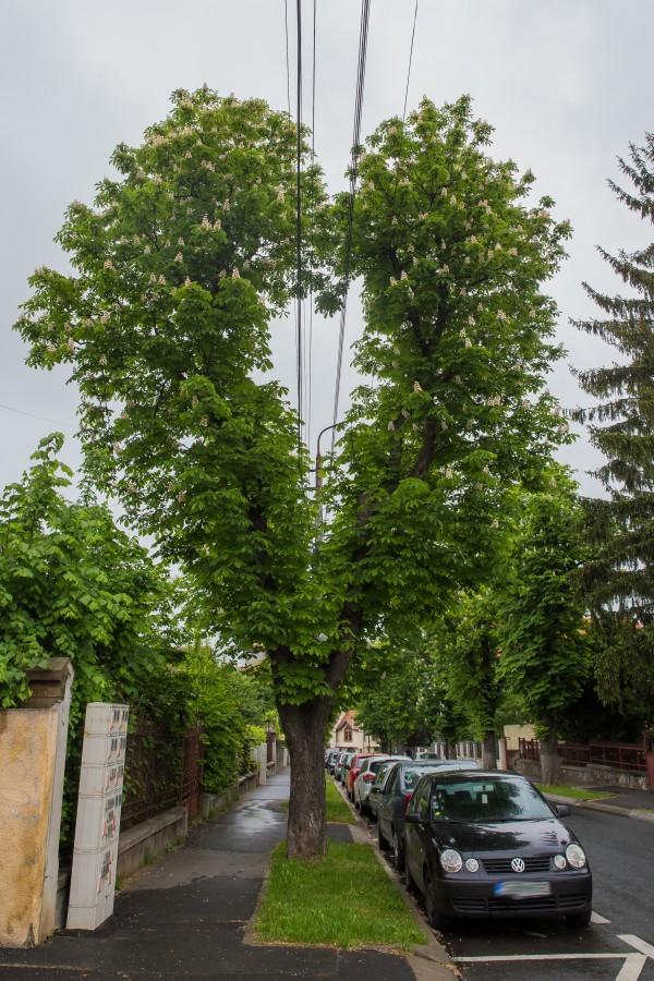 copac inima cabluri electrice (2)