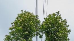 copac inima cabluri electrice (4)